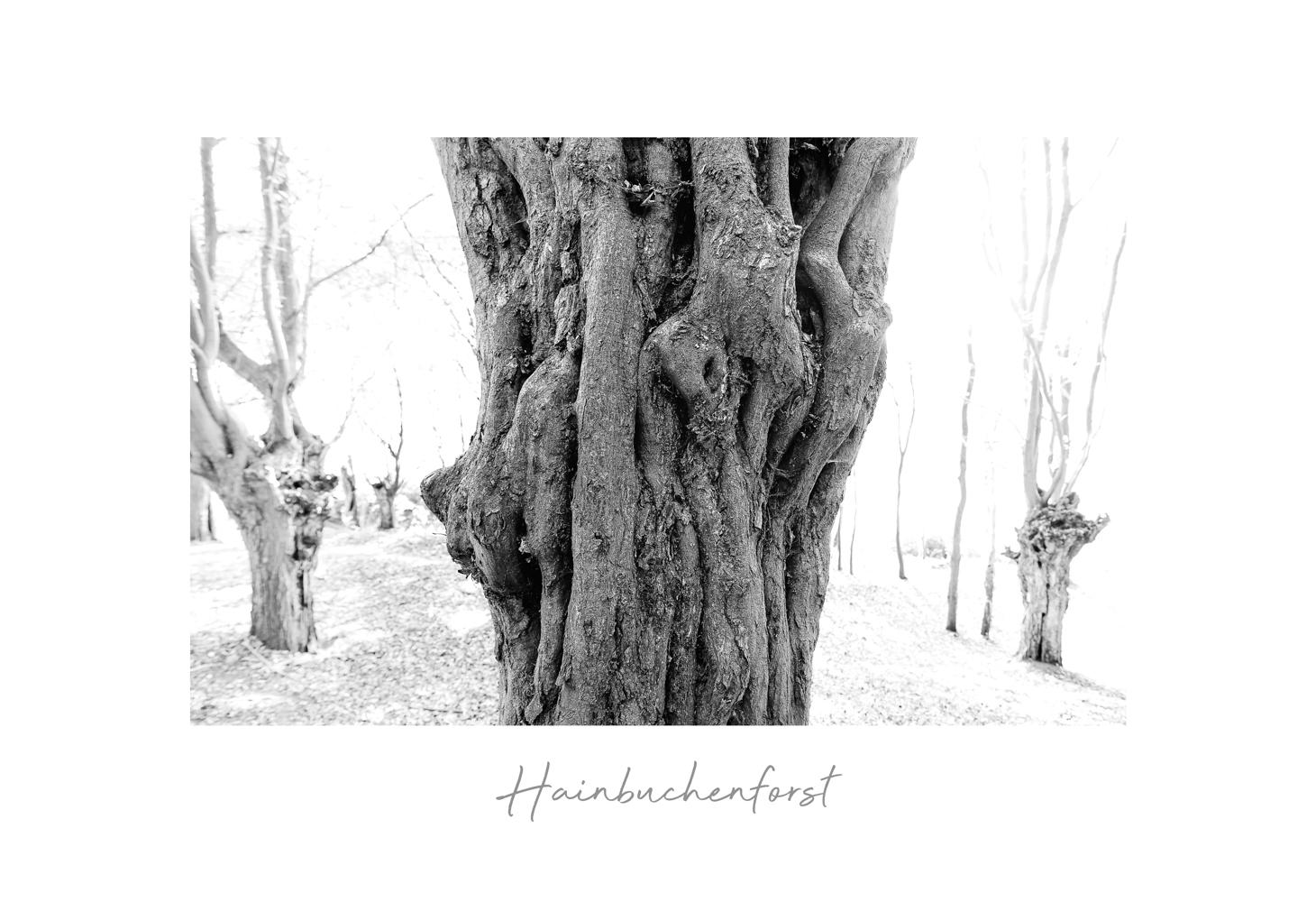 hainbuchenhorst-2