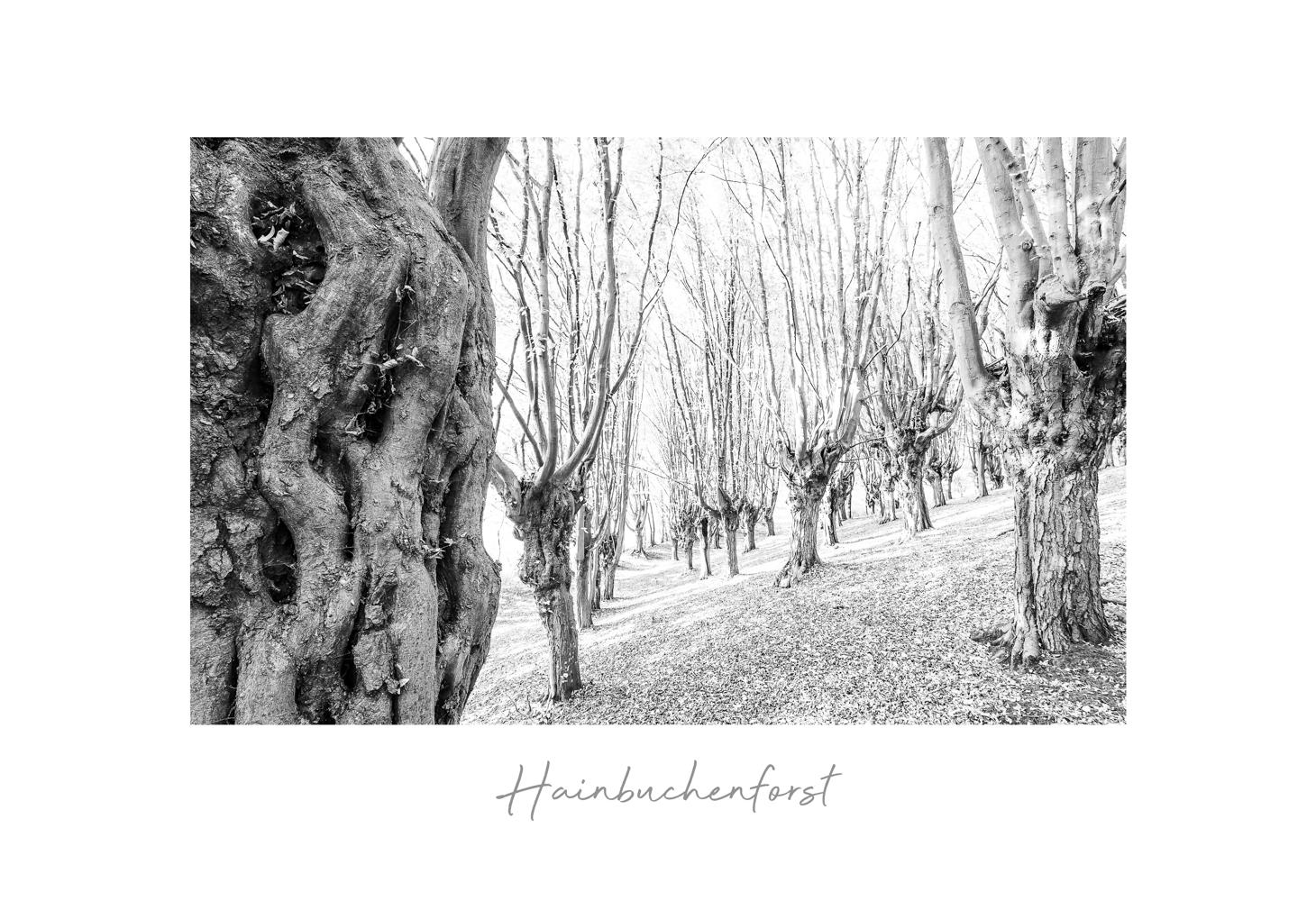 hainbuchenhorst-3-1